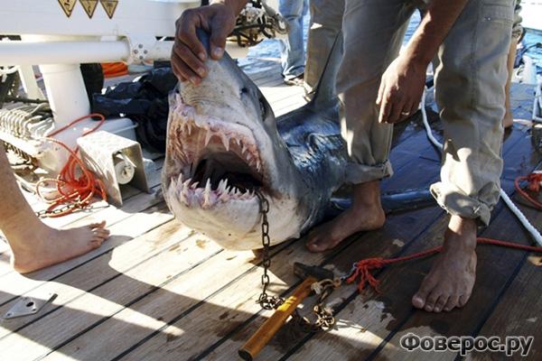 Акула напала на туристов, Египет