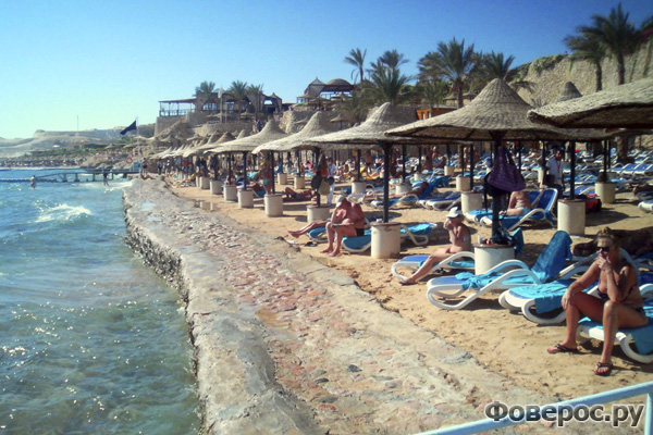 Нападение акулы - Египет
