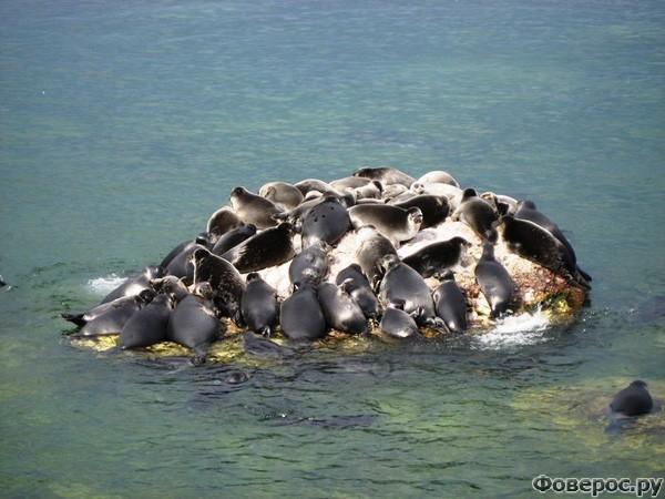 Байкал: Фауна
