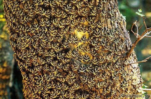 Родос: Долина бабочек