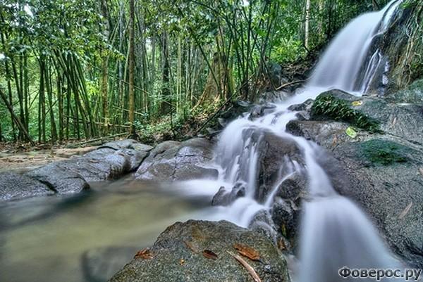 Кемасик: Тропический лес