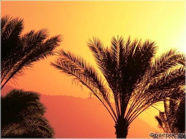 Шарм-эль-Шейх - Пляжи