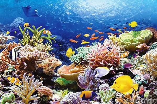 Шарм-эль-Шейх - Подводный мир