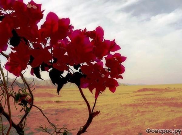 Шарм-эль-Шейх - Пустыня
