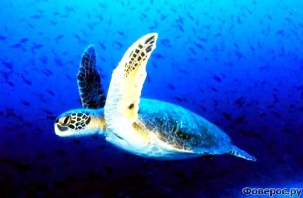 Закинф - Местная гордость - черепахи